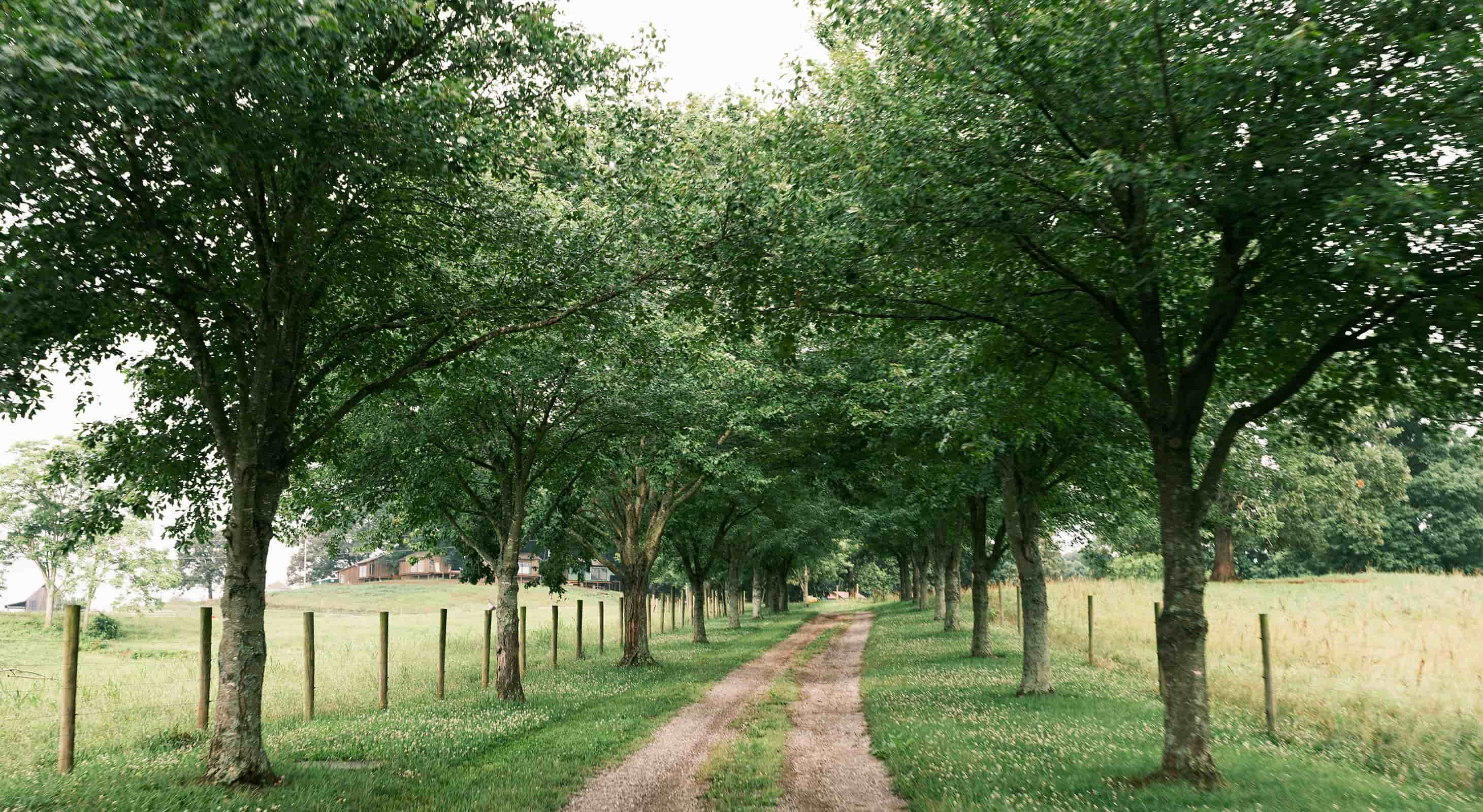 Tree lined path at our East Tennessee resort